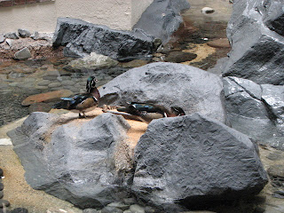 Embassy Suites Wood Ducks