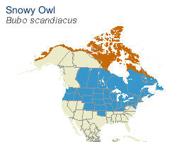 Snowy Owl Distribution - All About Birds