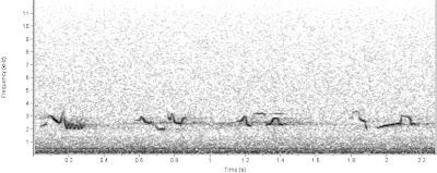 Spectrogram of American Robin song