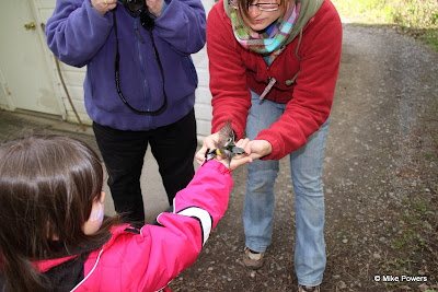 Magnolia Warbler Release