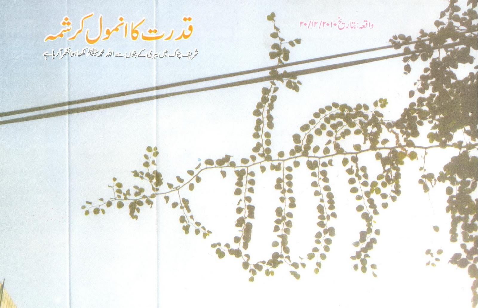 http://3.bp.blogspot.com/_VgXaDXiFvX4/TR8EwMiCNDI/AAAAAAAABA0/ohjbT4a2o9E/s1600/Allah+Muhammad+Names+appear+on+tree%2527s+leaves.+Masha+Allah.JPG