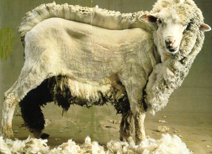 年賀状 2015 年賀状 羊 : FABULO: LAINE