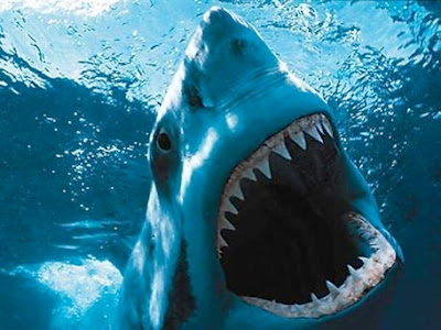 The Great White Shark