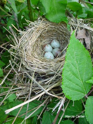 The Herron Nest