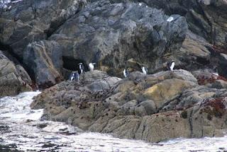 Pingüinos durante el crucero por el Doubtful Sound