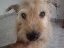 Em memória, a melhor cachorra do mundo