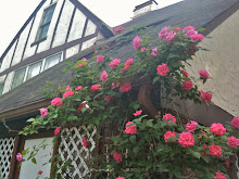 Hillcrest Cottage Roses - Apr 10