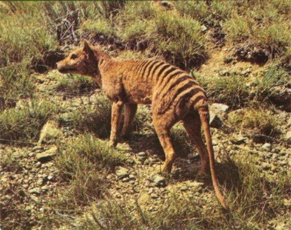 Todos los animales extintos.