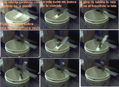 Consejo para eliminar ratas p gina 2 - Eliminar ratas en casa ...