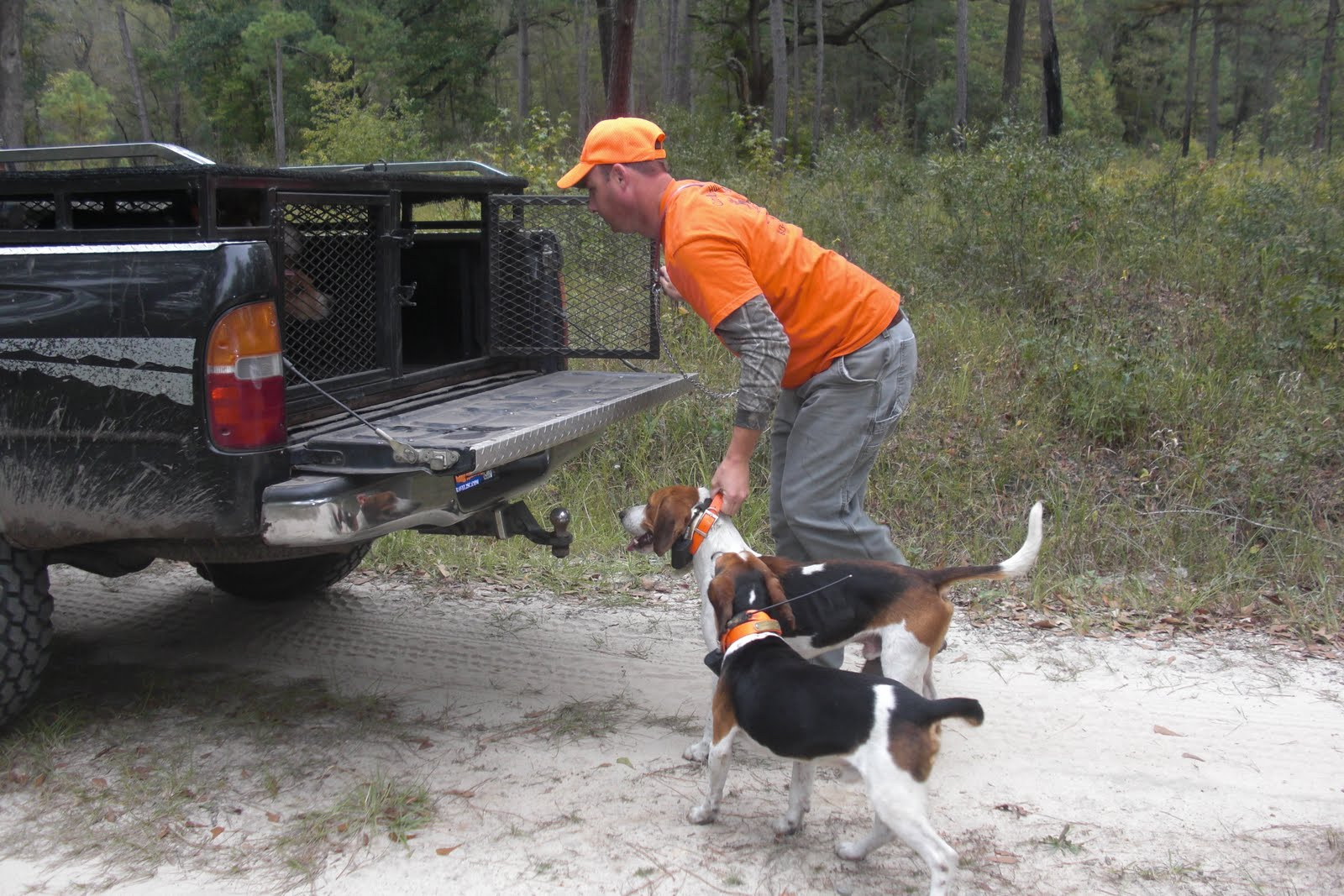 Deer hunting dog breeds - photo#15