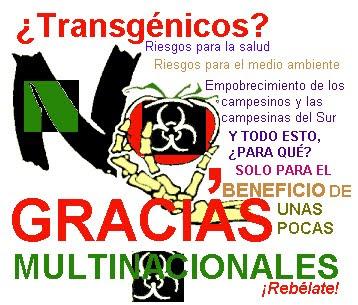 Maiz transgenico en mexico mapa