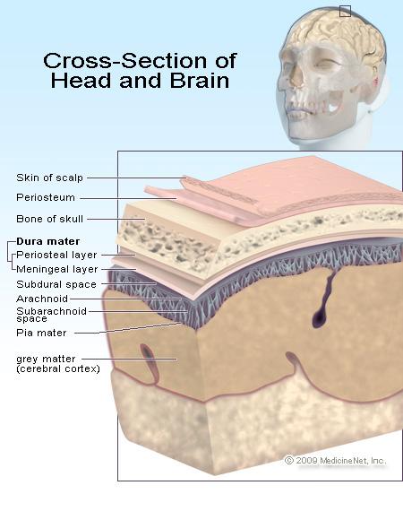 brain tissue layers - photo #21