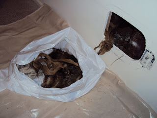 All City Animal Trapping Los Angeles California Dead