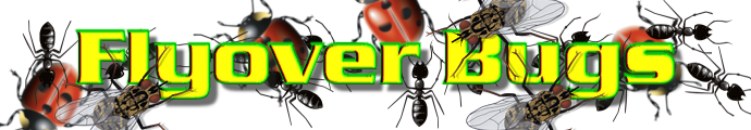 Flyover Bugs