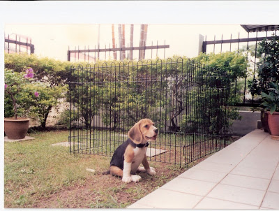 marley and me puppy years. Like Marley, trouble is also Kess#39; middle name. She did not like to kept in