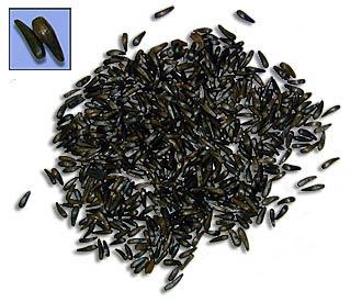 Black seed / Habbatus sauda