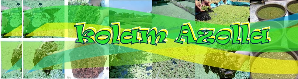 KolamAzolla