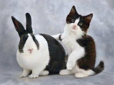 cute bunny with kitten holding one arm over it