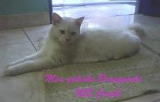 Meu gatinho Branquinho