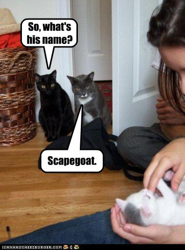 lol cat scapegoat