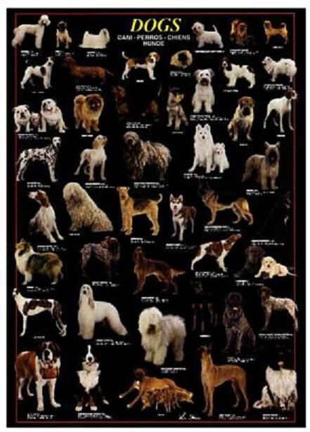 Some breeds are. When you are considering the purchase of a protection dog,