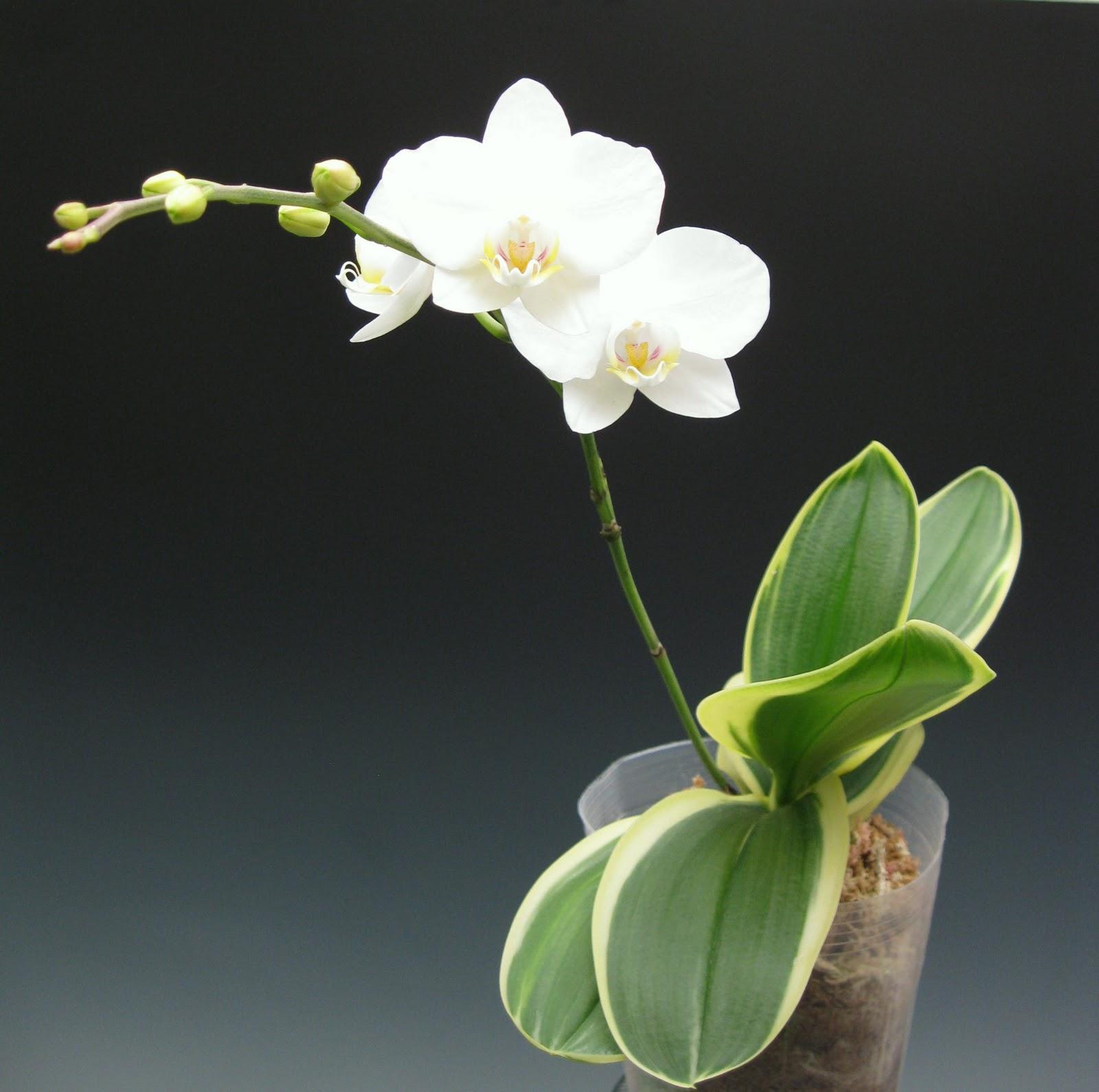 Orchidaceous Orchid Blog September 2010