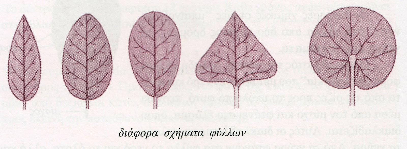 Ιριδισμοί στα φύλλα ..... της καρδιάς