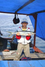 Salem Laut (Kingfish)
