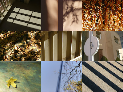 Ver é uma arte: pelos jardins de Serralves