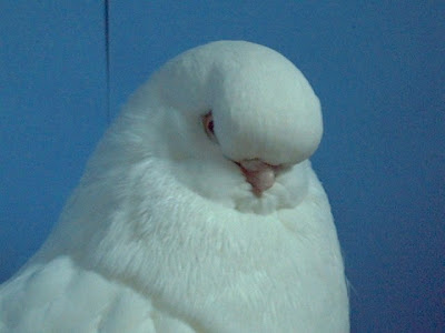 BB Head White Tumbler