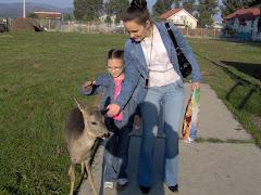 Impreuna cu mama mangaind o caprioara la fosta gradina Zoo din Onesti