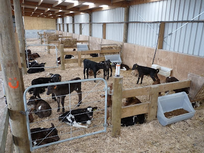 Calf Barn Designs