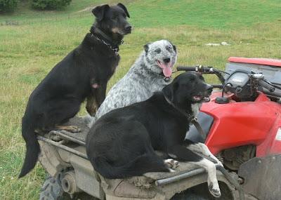 Woolshed 1 New Zealand Farm Working Dogs The Nz Huntaway