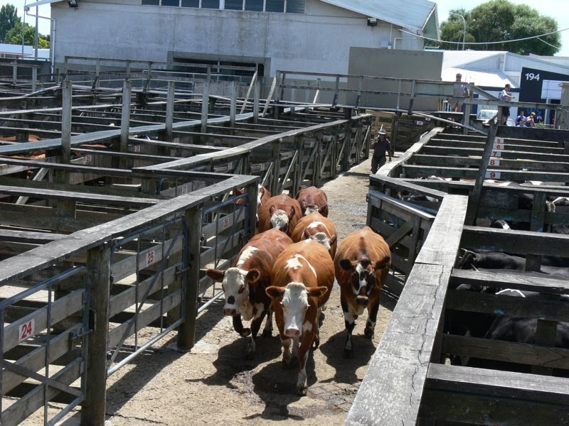 how to buy and sell cattle to make money