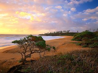 Exotic Hawaiian Beaches