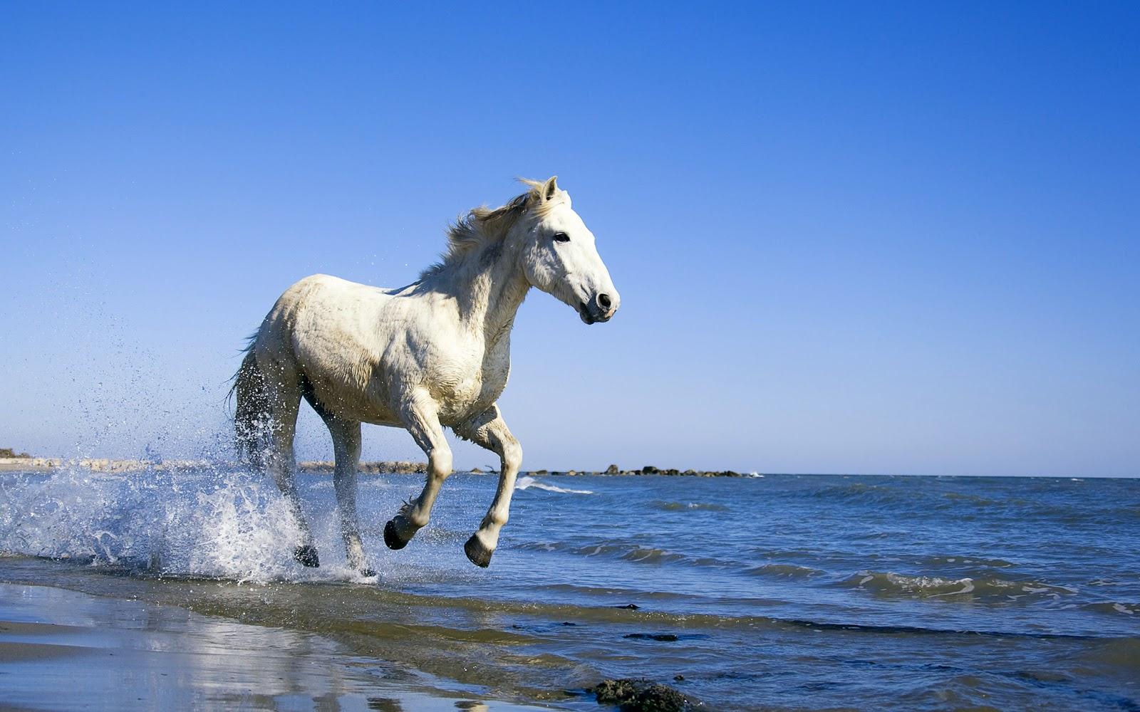 http://3.bp.blogspot.com/_W1ueYt1O3xs/TOey6Mm2AVI/AAAAAAAAXT8/zC1xYhPmxXE/s1600/Horses+Wallpapers+1920x1200.jpg