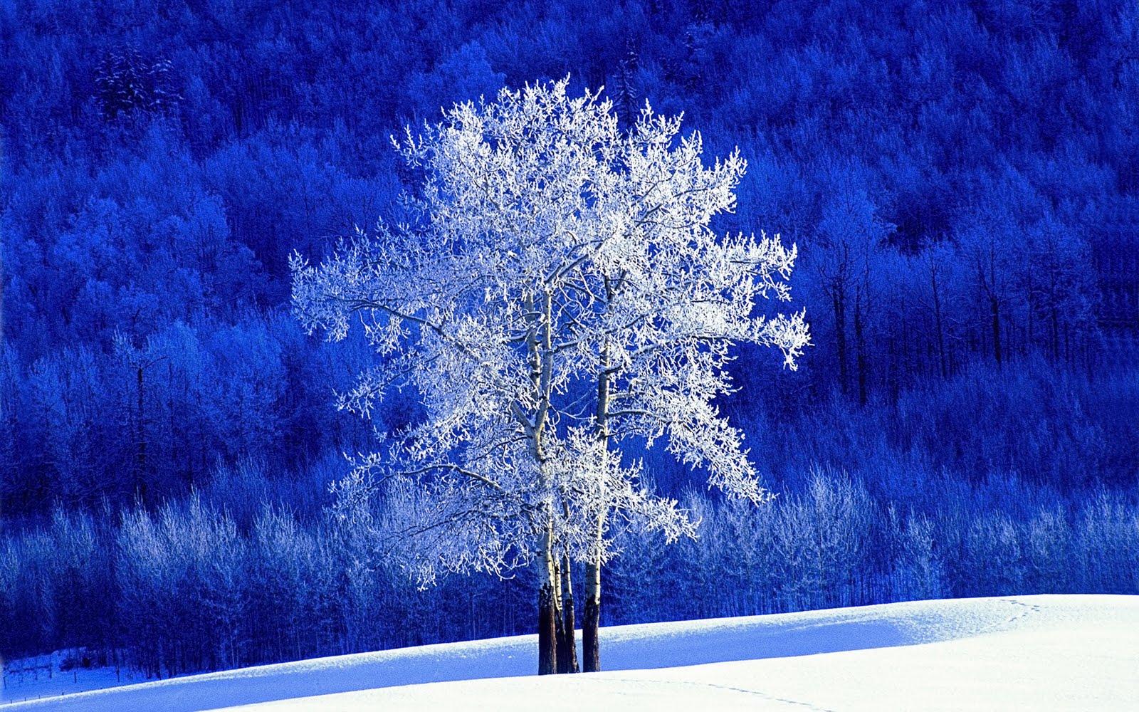 http://3.bp.blogspot.com/_W1ueYt1O3xs/TQqD-yiahyI/AAAAAAAAXbg/OOiNkYvDpDI/d/Winter+Landscape+Wallpapers+%25288%2529.jpg