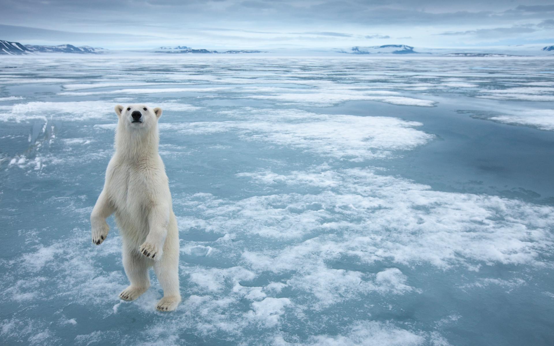 http://3.bp.blogspot.com/_W1ueYt1O3xs/TT7ZB-e9eqI/AAAAAAAAXsc/y5mFh2GH0sQ/d/arctic+wallpapers+%25286%2529.jpg