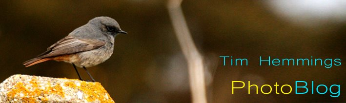 T.H PhotoBlog