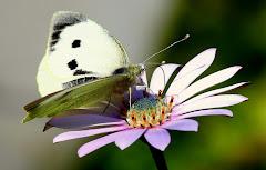 Che peteî yvoty !  (eu sou uma flor) !