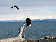 Sonhos de águia