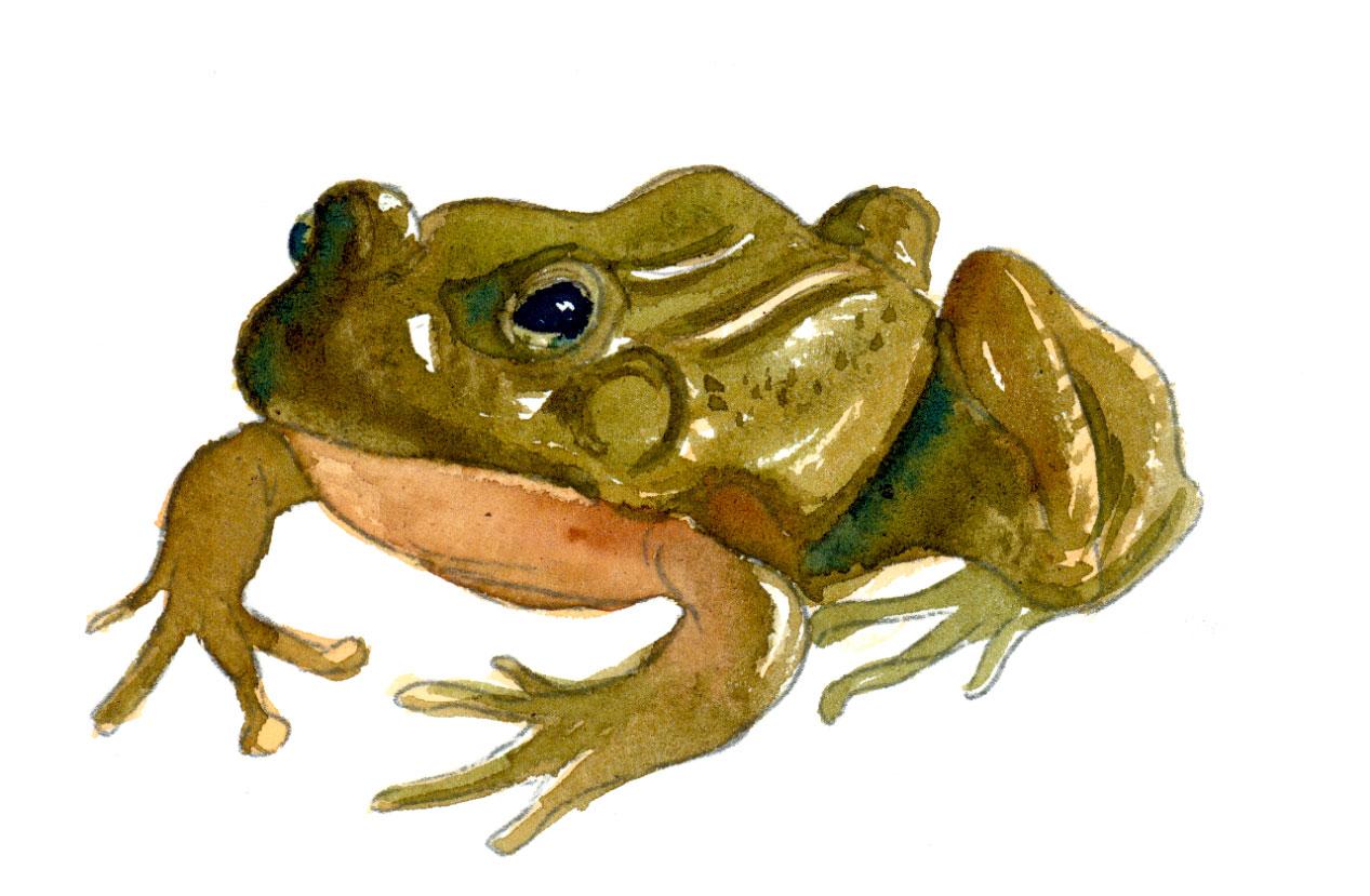 [frog20.jpg]