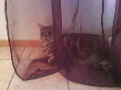 Mille försöker gömma sig bakom genomskinlig gardin