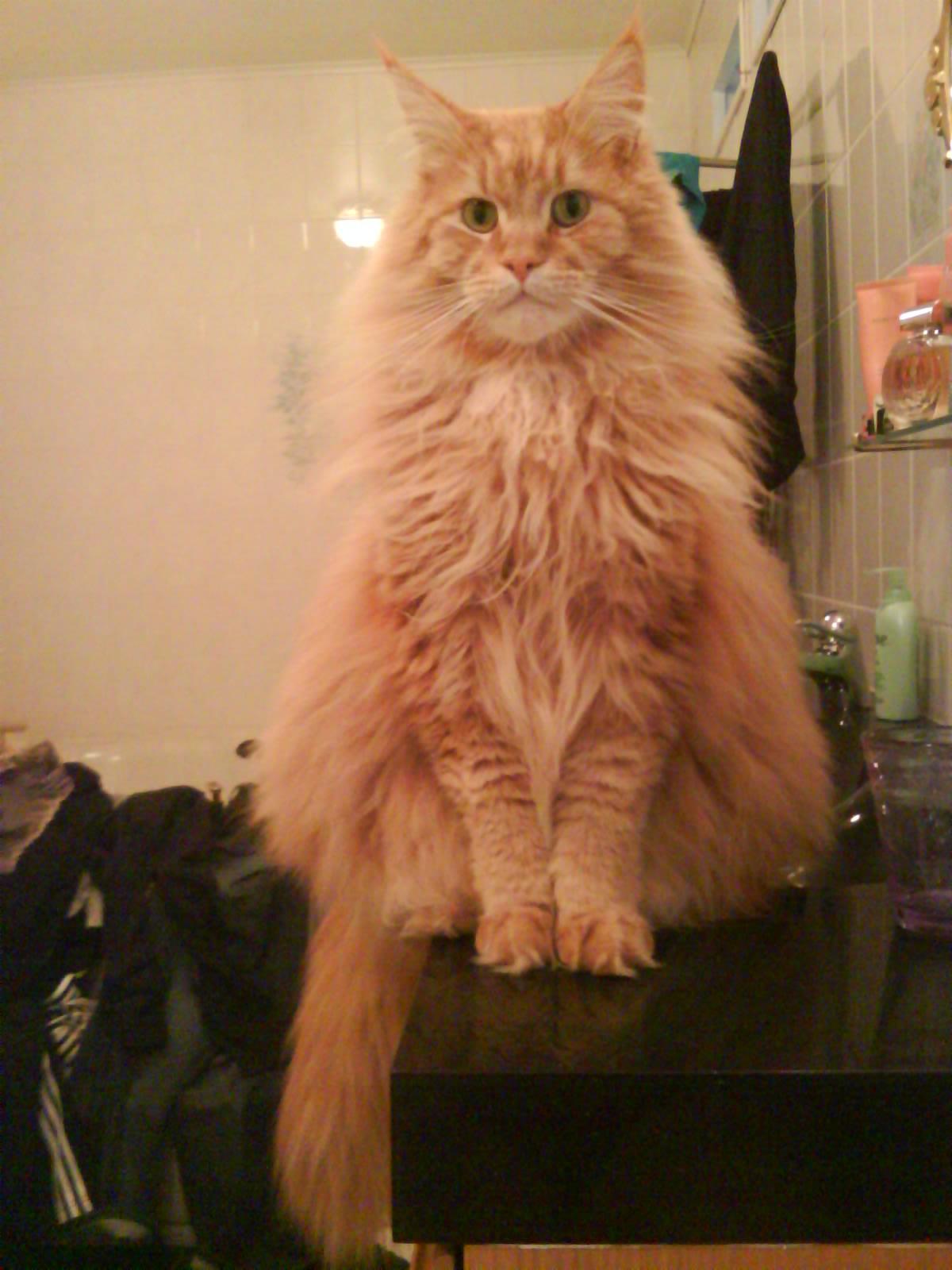 Zammy vill ha frukost nu!