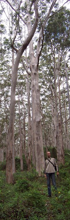 South-west karri forest