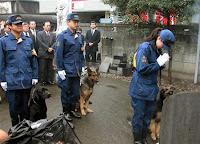 cane poliziotto giapponese