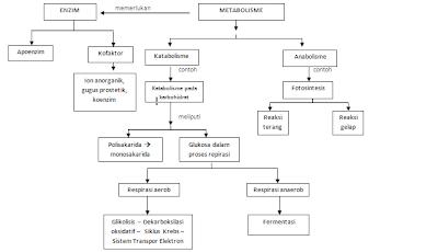 sistem pernapasan pada manusia dan hewan vertebrata - Pusat Informasi