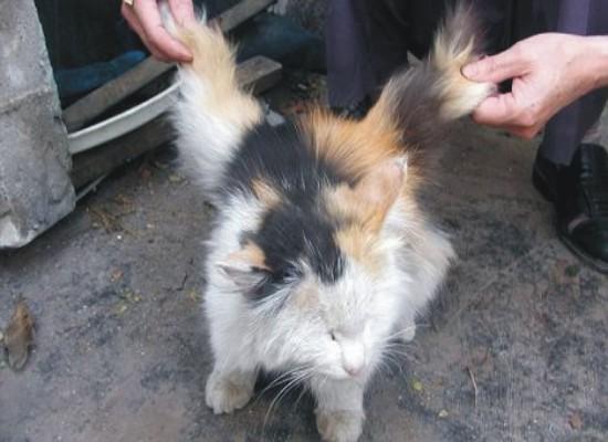 Kucing Bersayap Di Temukan Di Cina