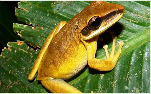 Resultado de imagen para foto en jpg de especie exoticas de colombia
