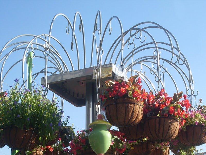 que desde siempre han adornados los balcones en los barrios de la ciudad transforman algunas calles en verdaderos jardines areos
